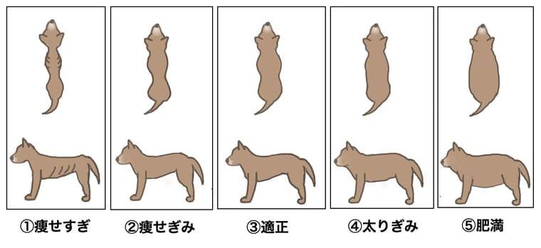 dog-check
