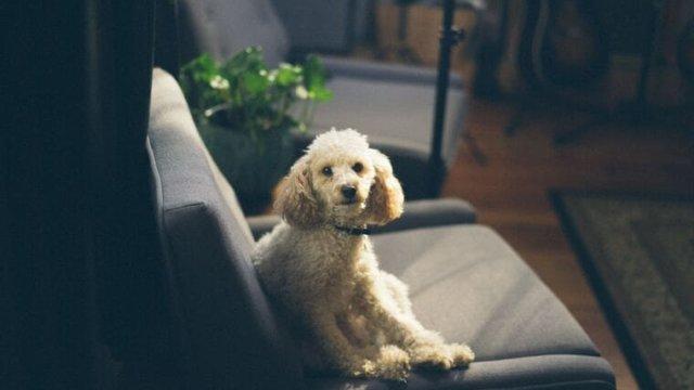Dog-answering-machine