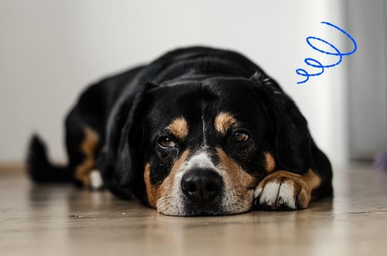 dog-stress