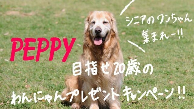 seniordog-peppy
