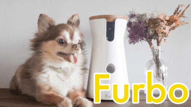 furbo-dogcamera