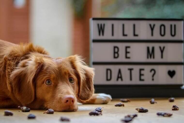dog-date