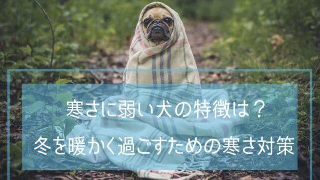 毛布を被った犬