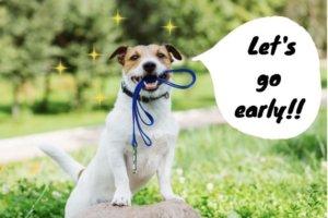 犬のリードを種類別に徹底解説!目的に合わせた選び方がおすすめ