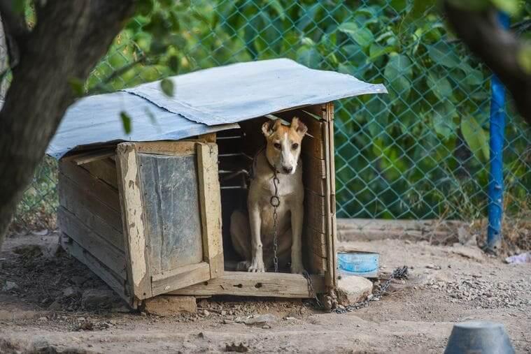 犬小屋に入った犬