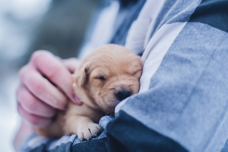 男性に抱かれている子犬